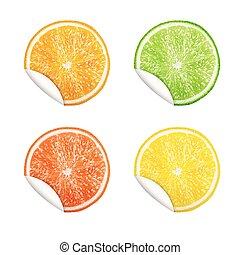 Set of citrus fruits. Orange, Lime, Grapefruit, Lemon.