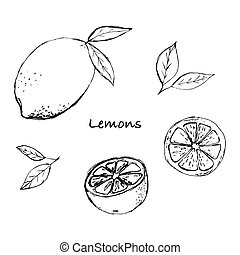 Set of citrus fruits sketch. Slice, cut pieces, lobule, plant leaves. Vector illustration Isolated on white background. Hand drawn.