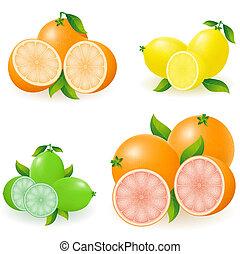 set of citrus orange lemon lime grapefruit illustration...
