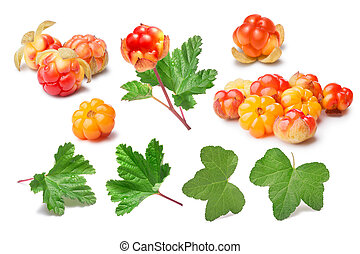 Set of cloudberries (Rubus Chamaemorus) and leaves, paths, elements