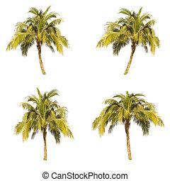 Set of coconut tree isolated on white background