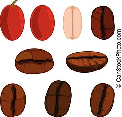 Set of coffee beans and berrys.