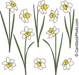 Set of color illustrations with white daffodils. Isolated vector objects.