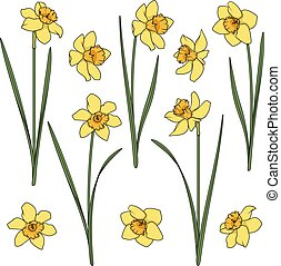 Set of color illustrations with yellow daffodils. Isolated vector objects.