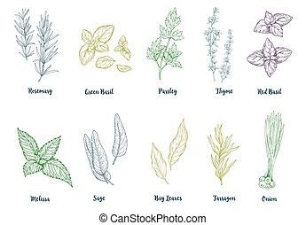 Set of colored hand drawn culinary herbs and spices