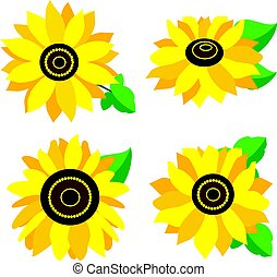 set of colored sunflowers