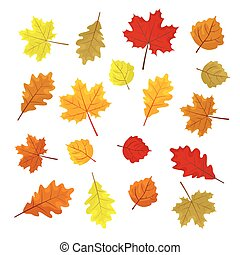 Set of colorful autumn leaves. Design elements Vector illustration. Leafs in random. White background.
