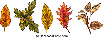 Set of colorful autumn leaves isolated on white background. Detailed hand drawn vector illustration.