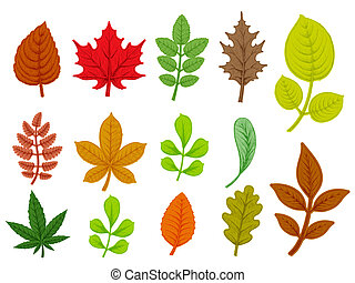Set of colorful autumn leaves. Isolated on white background.