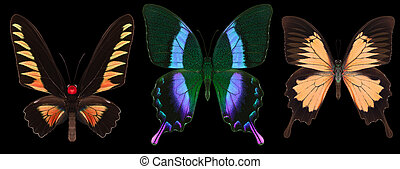 Set of colorful butterflies isolated on a black background