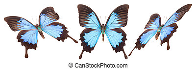Set of colorful butterflies isolated on a white background