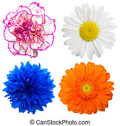 Set of colorful flowers isolated on a white background
