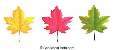 Set of colorful maple leaves red green yellow.