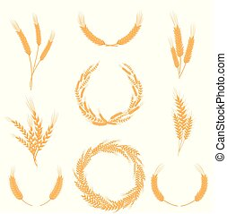 Set of compositions of wheat ears. Vector illustration on white background.