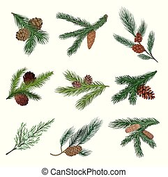 Set of coniferous branches with cones. Vector illustration...