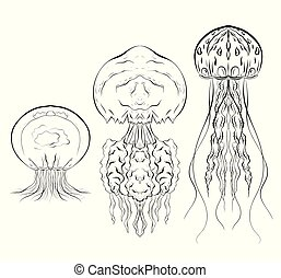 Set of contour black and white illustrations of jellyfishes.
