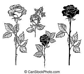 set of contour roses