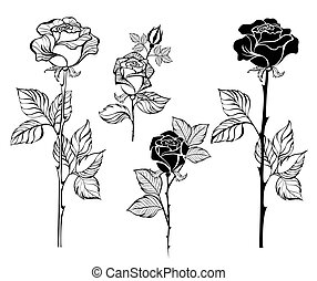 The Crescent Of Contour Roses Mystical Moon Painted Black Stems And