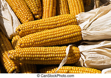 Set of corn
