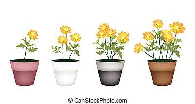 Set of Cosmos Flowers in Flower Pot