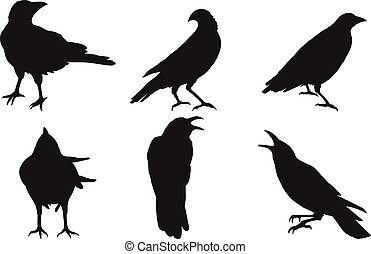 Set of crow vector on white background. Birds vector by hand drawing