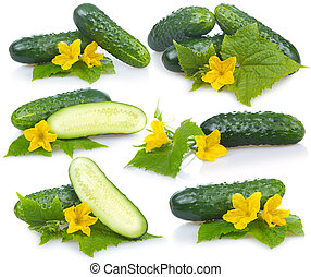 Set of cucumber vegetables with leafs and flowers isolated