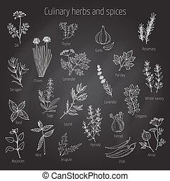 Set of culinary herbs and spices