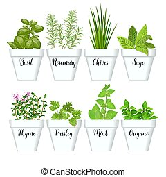 Set of culinary herbs in white pots with labels. Green...