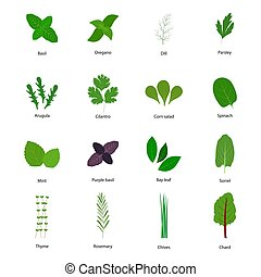 Set of culinary herbs, vector illustration