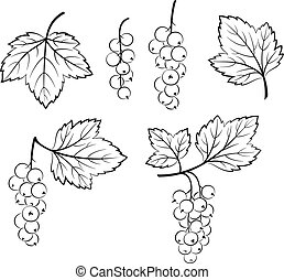 Set of Currant Pictograms - Set of Currant, Berries and...