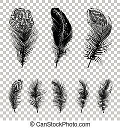 Set of cute feathers silhouettes.