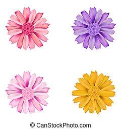 Set of dahlia flowers