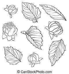 set of dahlia leaves and buds - set of beautiful black and ...