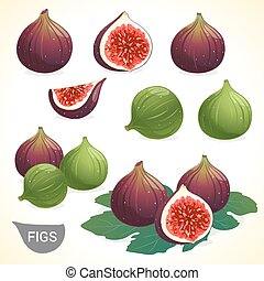 Set of dark fig and green figs in various styles vector...
