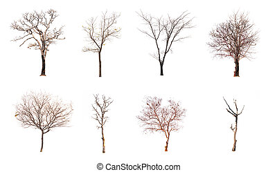 Set of dead tree isolated on white background