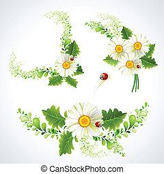 Decorative chamomiles