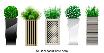 Set of decorative in pots with plants