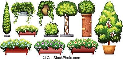 Set of decorative plants