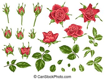 Set of decorative red roses. Beautiful realistic flowers, buds and leaves.