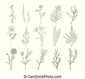 Set of detailed botanical drawings of flowers, ferns and succulent plants isolated on white background. Bundle of floral decorations hand drawn with contour lines. Elegant natural vector illustration.