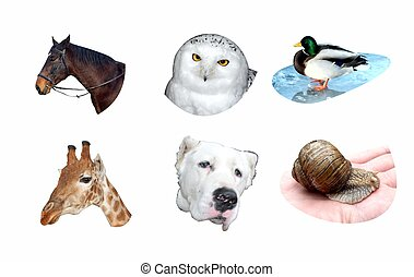 Set of different animals for prints