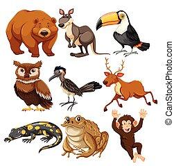 Set of different animals illustration