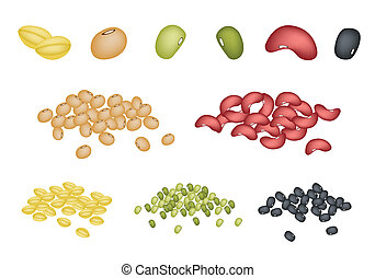 An Illustration Collection of Different Dried Beans, Mung Bean, Kidney Bean, Black Eye Bean, Soy Bean and Yellow Split Peas