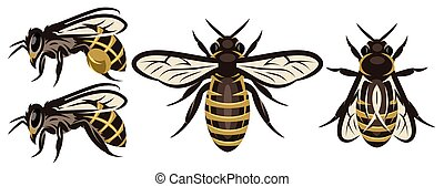 Set of different bees. Design elements. Colored vector illustration