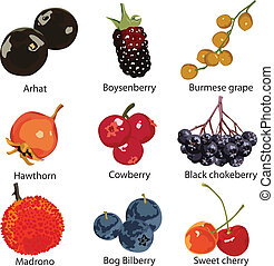 set of different berries - 9 different berries on a white...