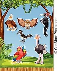 Set of different bird sticker illustration