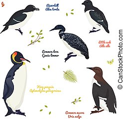 set of different birds, king penguin, common loon and murre, razorbill, little auk