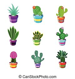 Set of different cacti