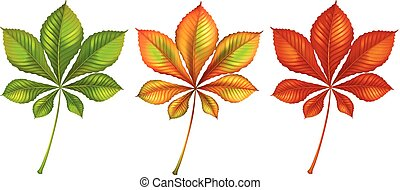 Set of different color leaves