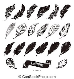 Set of different feathers